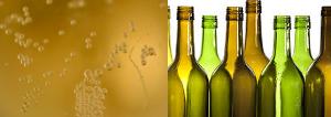 Sparkling wine filling in glass bottles